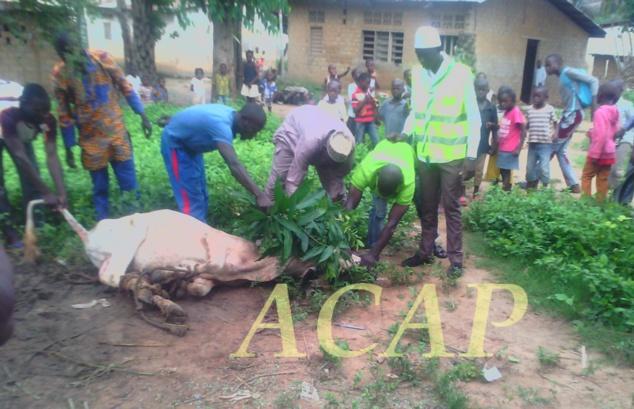 Imam Idriss Koyakozou appelle les Centrafricains à l'unité