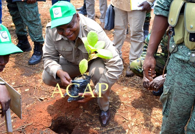 Le Président Touadéra se prêtant à l'exercice du planting à Bogangolo
