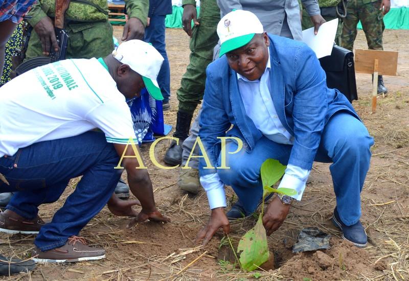 Le Chef de l'Etat Touadéra mettant en terre un jeune plant de teck