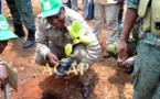 Le Président Faustin-Archange Touadéra préside à Bogangolo la Journée nationale de l'arbre 2018