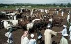 Réouverture prochaine du marché à bétail de Boboui