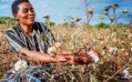 Apurement des arriérés des redevances des cotonculteurs de la préfecture de la Kémo
