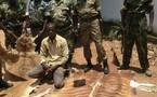Centrafrique: Saisie à Bangui de quatre peaux d'espèces animales