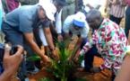Visite du site de la palmeraie Palme d'Or dans la commune de la Lessé par le président de la BDEAC
