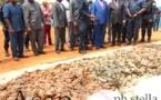 Coup de filet de la police sur un réseau de trafiquants de peaux de  pangolins