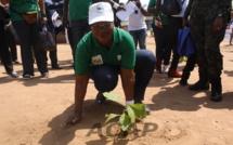 Planting d'arbres dans l'enceinte de l'Ecole Benz-vi dans le 5ème arrondissement de Bangui